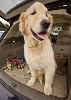 Dog Behavior | How to Survive a 1,300 Mile Road Trip with 1 cat & 1 dog | Pets Best