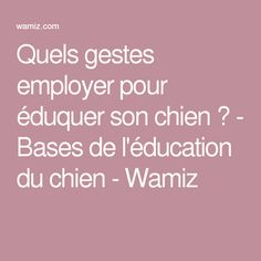 Quels gestes employer pour éduquer son chien ? - Bases de l'éducation du chien - Wamiz Goldendoodle, Dog Cat, Puppies, Noblesse, Animals, Advice, Tips, Gatos, Black Pug