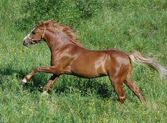 Nydelig! My Passion, Horses, Animals, Animales, Animaux, Horse, Words, Animal, Animais