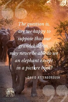 """""""The question is, are we happy to suppose that our grandchildren may never be able to see an elephant except in a picture book? Elephant Sanctuary, David Attenborough, You Matter, Group Tours, African Elephant, Grandchildren, South Africa, Animal, This Or That Questions"""