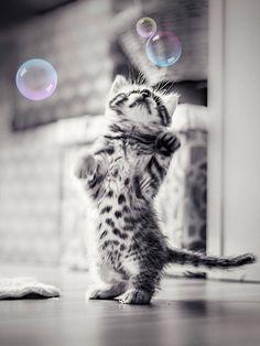 ça bulle pour moi