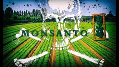 Monsanto Food Trap & Amazon Slavery