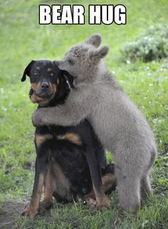 A baby bear giving a suspicious dog a kiss. Unlikely friends! Beautiful Creatures, Animals Beautiful, Beautiful Babies, Cute Baby Animals, Funny Animals, Wild Animals, Animals Dog, Unlikely Animal Friends, Hilarious Animals