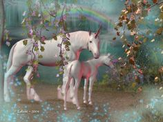 unicorns | MOTHER AND COLT~~, unicornl tournament page, unicorn tour page ...