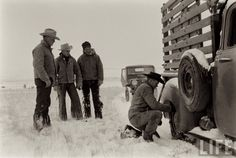Cattle Drive In Montana –Photo by Ralph Crane