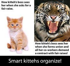 Organizing kitteh
