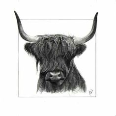 "Day 6! Highland Cow pencil sketch. 5"" x 5"". Pencil drawing on watercolour paper. £25.00 + £1.25 postage. www.facebook.com/NorthHighlandsArtist. #highland #cows #art #sketch #original #pencil #drawing"