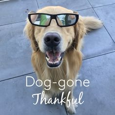 Elisabeth is talking all about thankfulness through different love languages, with cute golden retriever photos for examples.