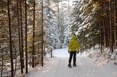 Wild Saranac Lake Snowshoeing   Saranac Lake, Adirondacks Saranac Lake, Old Train Station, Evergreen Forest, Winter Hiking, Cross Country Skiing, Family Adventure, Travel Around, Wilderness, Pond