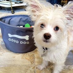 Good dog, or best dog? #homemarkethuck #dogsofTHM #dogfriendly #tbt