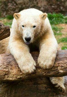 Enjoying His Log!