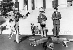 In November 1983, Pamunkey Chief Tecumseh Cook danced around a deer and turkey that his tribe presented to Gov. Charles S. Robb while Raymond Bush played a drum. The annual Thanksgiving eve offering commemorates the 17th-century peace treaty between Virginia's Pamunkey and Mattaponi tribes and the English. (Capitol Police had the game dressed and donated it to Children's Hospital.) Richmond.com: From The Archives