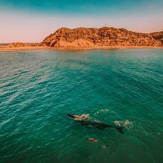 Whale watching in Hervey Bay. Rainbow Beach, Australia Tours, Most Beautiful Beaches, Whale Watching, Byron Bay, Gold Coast, Sailing, Road Trip, Dreams