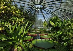 Botanical gardens of the University of Basel Q Garden, Easy Garden, Indoor Garden, Indoor Plants, Garden Ideas, Basel, Climbing Vines, Types Of Plants, Clematis