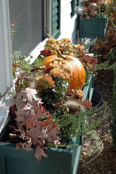 Autumn window box