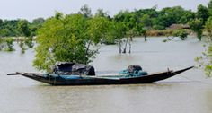 sunderban tiger project | Getting to the Sunderban National Park is no mean feat. The closest ...
