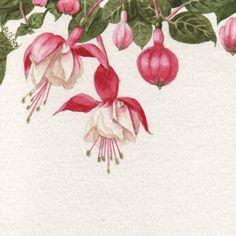 Pink Fuchsia Print