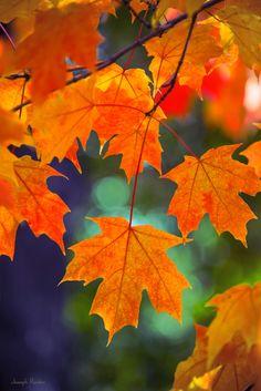 de-preciated:  Autumn by joe.routon on Flickr. Source - (http://flic.kr/p/pRpBt2) Leaves in New Jersey