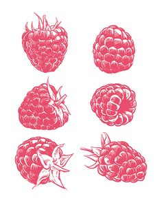 80% Off Sale Drawing raspberry isolated. Hand drawn fruit vector. Berry with…
