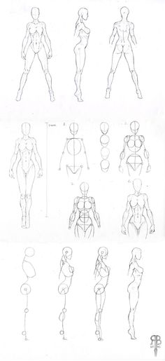 female body shapes reference by ~Rofelrolf on deviantART #drawing #body #reference
