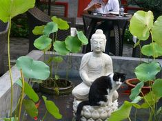 hotels with resident cats | Foto di Hotel Cote Cour Beijing : One of the 4 resident Hutong cats