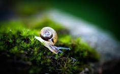 snail - Buscar con Google