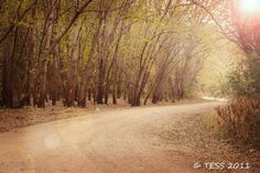 Timber Road Photography Print - Fall Timber Photography -  Woodland Photography - Landscape - pinned by pin4etsy.com