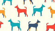 As a species, dogs are less plagued by heart disease than humans, whose lifestyle choices…