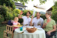 Méhek, darazsak - PROAKTIVdirekt Életmód magazin és hírek - proaktivdirekt.com