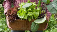 Balkón či terasa môžu byť nielen príjemným miestom na oddych, ale aj malou záhradkou.