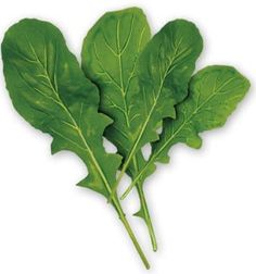 """Arugula- """"Also known as roquette or rocket, arugula is a cruciferous vegetable- a member of the flavorful mustard family, known for its cancer-inhibiting compounds called indole-3-carbinols."""" -Health Magazine Nov/Dec 1993"""