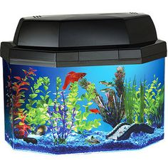 1000 images about swimmin with the fishes on pinterest for Betta fish tanks walmart
