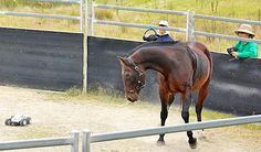Rethink urged of Monty Roberts' horse-training method - News - Horsetalk.co.nz