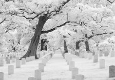 WINTER AT ARLINGTON NATIONAL CEMETERY.
