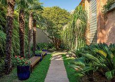 Entrada | O caminho que leva à porta principal é ladeado por palmeiras moinho-de-vento com jardim vertical de samambaias (à esq.) e cicas com patas-de-elefante (à dir.). Nos vasos, ixoras. Ao fundo, jabuticabeira e aspidistras rentes ao muro (Foto: Edu Castello)