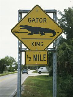 Road Sign For Alligator Crossings