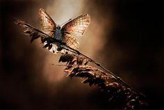 Luminosity, Photo by Fabien BRAVIN
