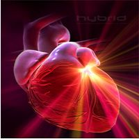 The heart's energy field is up to 400 times stronger than the brain's. Body Of Evidence, Brain And Heart, Best Vibrators, Consciousness, Nature, Hearts, Tools, Math, Cholesterol