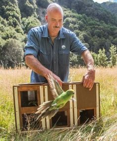 Twenty-three new parakeets have bolstered a Canterbury population of the rare birds: