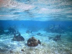 23 Reasons to Love San Pedro, Belize