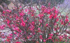 Fotos de la primavera de los lectores