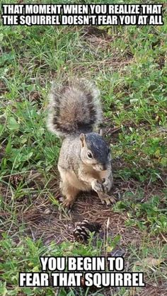 ae13b3cf4cf26f5618e31b960a89d127 animal quotes animal memes remember me? you should i'm your worst nightmare it's a,Funny Squirrel Memes