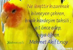 Ne ibrettir kızarmak  biImeyen çehren,  bırak kardeşim tahsiIi ;  git önce edep,  haya öğren. Mehmet Akif Ersoy