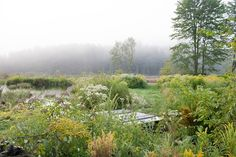 Vermont garden wildflowers at pond edge ; Gardenista Joe pye and goldenrod,aster and queen anns lace