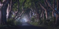 """The Dark Hedges - <a href=""""http://www.daniel-photography.eu/Post-Processing-English-Page"""" alt=""""Daniel Fleischhacker""""> POST PROCESSING </a><a href=""""http://www.daniel-photography.eu/Bildbearbeitung-Deutsch-Videos"""" alt=""""Daniel Fleischhacker"""">BILDBEARBEITUNG</a> <a href=""""http://www.daniel-photography.eu"""" alt=""""Daniel Fleischhacker"""">WEBSITE</a> <a href=""""https://www.instagram.com/daniel_landscapes/"""">INSTAGRAM</a>  Many techniques used on this image are demonstrated in my set of in depth tutorials…"""