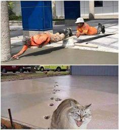 Кіт залишив сліди на бетоні