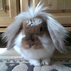 bunnies make great indoor pets!