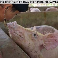 #vegan what have we done to billions of beautiful animals? We are monsters. Please be vegan. All life is precious. No exceptions.