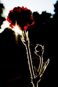 flower by bmglen, via Flickr