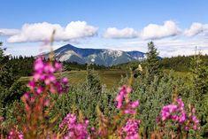 Fotoparade 2020 - Meine Foto-Momente & Erkenntnisse aus dem Corona-Jahr Mount Rainier, Mountains, Nature, Travel, Corona, Pictures, Weather Report, Snow Mountain, Teneriffe